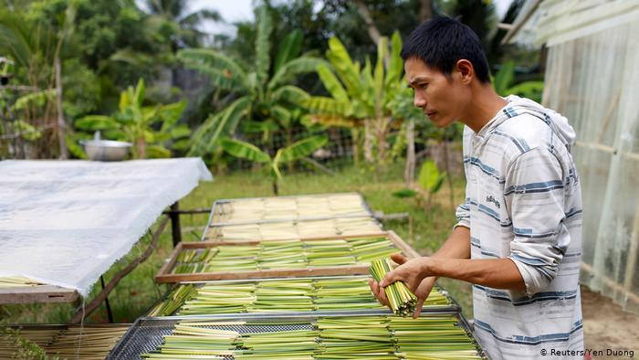 Tran Minh Tien lays grass straws out to dry (Reuters/Yen Duong)