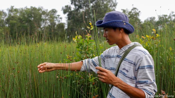 Tran Minh Tien, wearing a blue hat, picks stems of tall grass. (Reuters/Yen Duong)